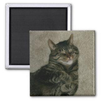 Sleeping Tabby Kitty Cat Refrigerator Magnet