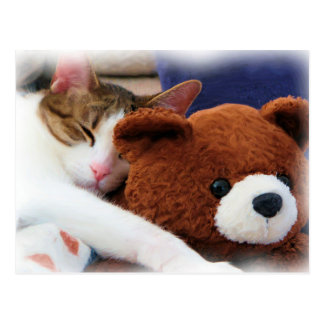 Sleeping Tabby Teddy Bear Postcard