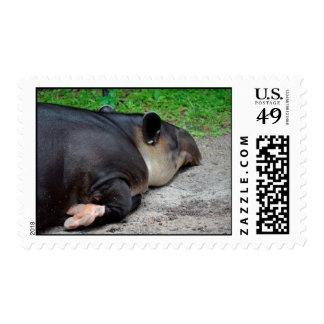sleeping tapir animal from back zoo critter wild postage