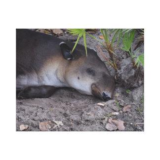 sleeping tapir under palmetto close up canvas print
