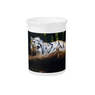 Sleeping Tiger, Big Cat, Wild Animal Photography Pitchers