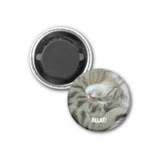 Sleeping Tiger-Cat 1 Inch Round Magnet