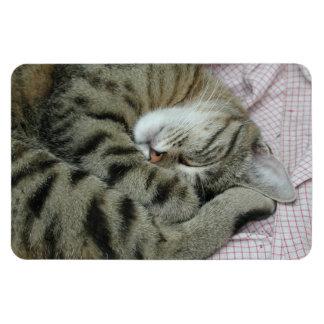 Sleeping Tiger-Cat Rectangular Photo Magnet