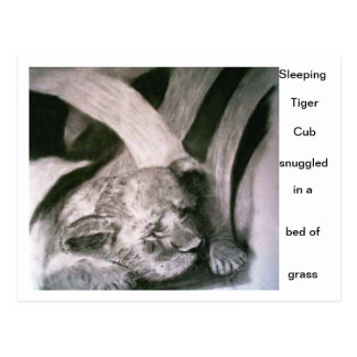 Sleeping Tiger Cub Postcard