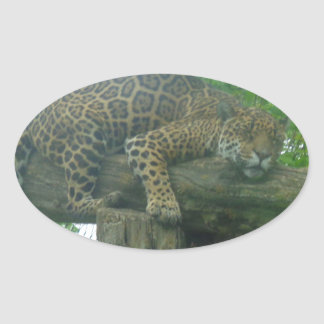 Sleeping Tiger on Tree, Forest, Nature, Wildlife Oval Sticker