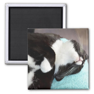sleeping tuxedo cat chin view kitty image 2 inch square magnet
