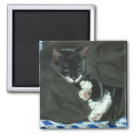 Sleeping Tuxedo Cat Magnet
