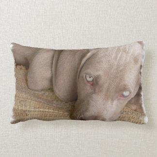 Sleeping Weimaraner Pillow