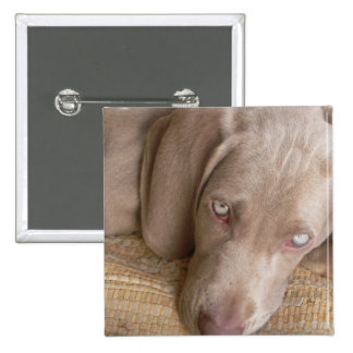 Sleeping Weimaraner Square Pin
