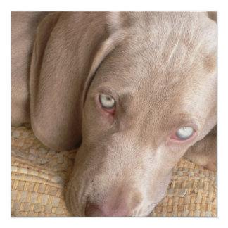 "Sleeping Weimeraner Dog Invitation 5.25"" Square Invitation Card"