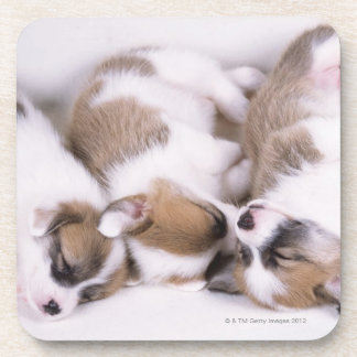 Sleeping welsh corgi puppies beverage coaster