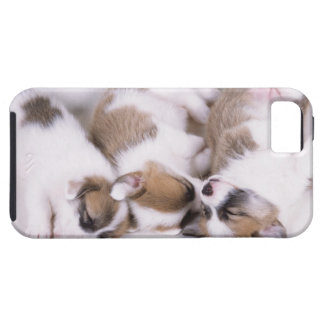 Sleeping welsh corgi puppies iPhone 5 covers