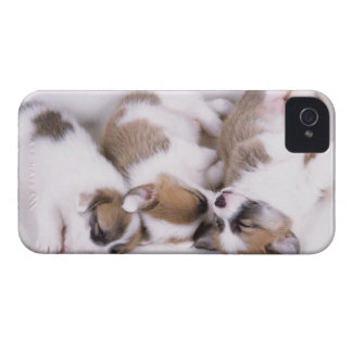 Sleeping welsh corgi puppies iPhone 4 case