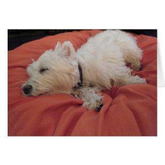 Sleeping Westie Photo Greeting Card