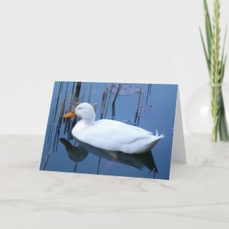 Sleeping White Duck Reflection Card