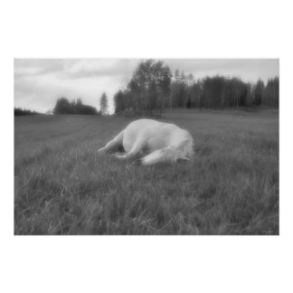 Sleeping White Horse Ranch Field Equine B&W Photo Poster