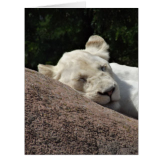 Sleeping White Lioness Card