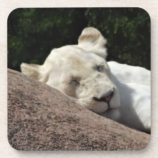 Sleeping White Lioness Beverage Coasters