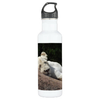 Sleeping White Lioness Stainless Steel Water Bottle