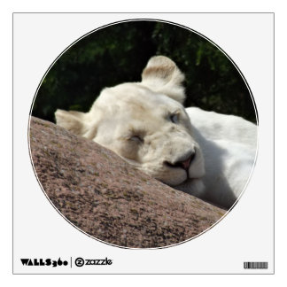 Sleeping White Lioness Wall Decal