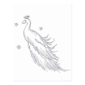 Sleeping White Peacock Postcard