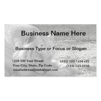 sleeping white tiger bw photograph of huge cat Double-Sided standard business cards (Pack of 100)