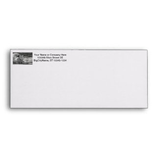 sleeping white tiger bw photograph of huge cat envelope