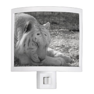 sleeping white tiger bw photograph of huge cat night light