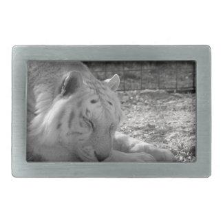 sleeping white tiger bw photograph of huge cat rectangular belt buckle