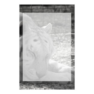 sleeping white tiger bw photograph of huge cat stationery