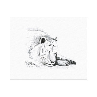 Sleeping White Tiger head and paws Pencil Drawing Canvas Print