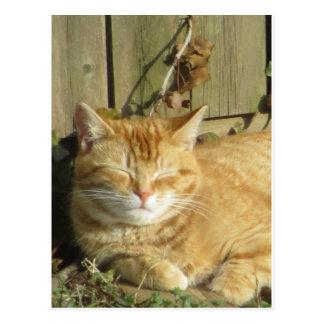 Sleeping Yellow Cat Postcard