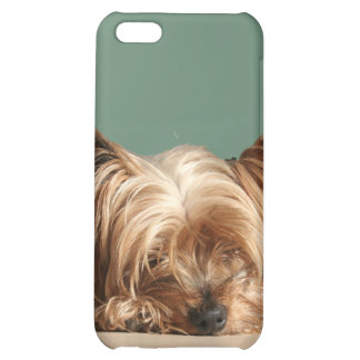 Sleeping  Yorkie Dog iPhone 4 Speck Case Cover For iPhone 5C