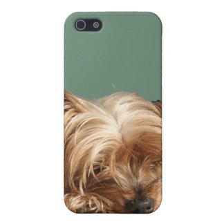 Sleeping  Yorkie Dog iPhone 4 Speck Case iPhone 5 Case