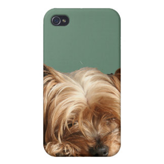 Sleeping  Yorkie Dog iPhone 4 Speck Case Cases For iPhone 4