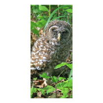 Sleepy Baby Barred Owl Bookmark Rack Card