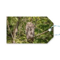 Sleepy Barred Owl Gift Tags