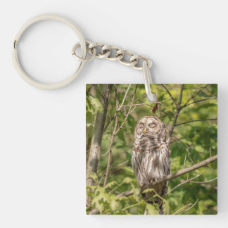 Sleepy Barred Owl Keychain