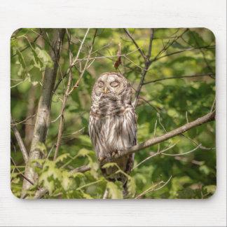 Sleepy Barred Owl Mouse Pad