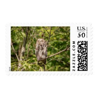 Sleepy Barred Owl Postage