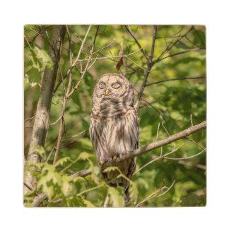 Sleepy Barred Owl Wooden Coaster