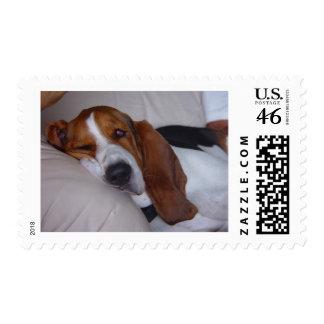 Sleepy Basset Hound Postage Stamp