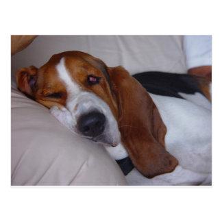 Sleepy Basset Hound Postcard