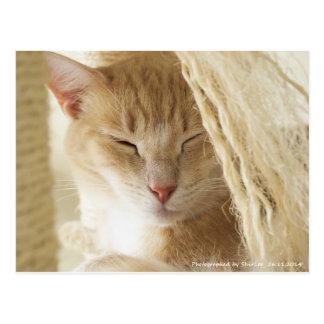 Sleepy cat 02 postcard