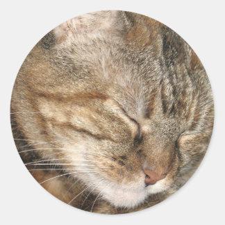 Sleepy Cat Classic Round Sticker
