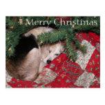 Sleepy Christmas Beagle Postcards