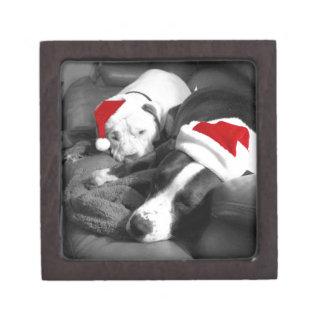 sleepy christmas pitbull puppies adorable santa gift box