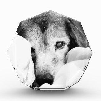 sleepy cuddle dog on bed black white gray award