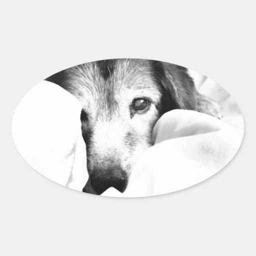 sleepy cuddle dog on bed sticker