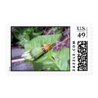 Sleepy Dandelion Stamp